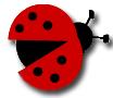 ladybug_edited-1